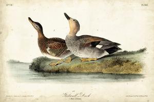 Audubon Ducks VI by John James Audubon