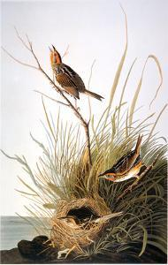 Audubon: Finch by John James Audubon