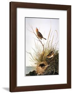 Audubon: Finch by John James Audubon
