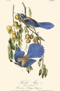 Audubon Florida Jays by John James Audubon