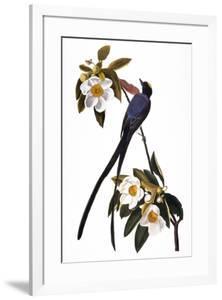 Audubon: Flycatcher, 1827 by John James Audubon