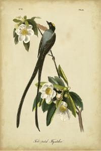 Audubon Fork-tailed Flycatcher by John James Audubon