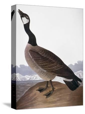 Audubon: Goose, 1827