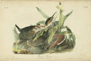 Audubon Green Heron by John James Audubon