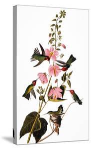 Audubon: Hummingbird by John James Audubon