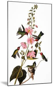 Audubon: Hummingbird by John James Audubon