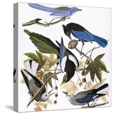 Audubon: Jay And Magpie