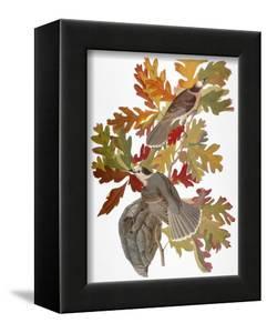 Audubon: Jay by John James Audubon