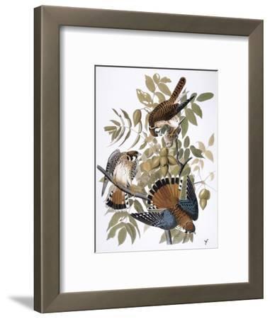 Audubon: Kestrel, 1827