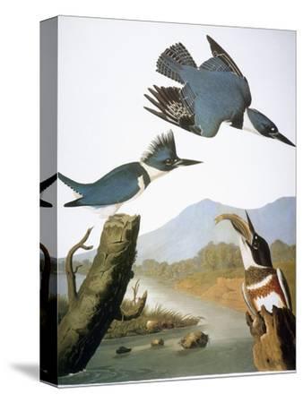 Audubon: Kingfisher, 1827