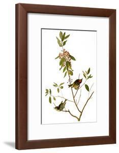 Audubon: Kinglet, 1827 by John James Audubon