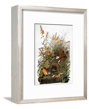 Audubon: Meadowlark