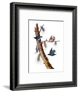 Audubon: Nuthatch by John James Audubon