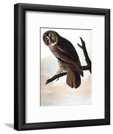 Audubon: Owl