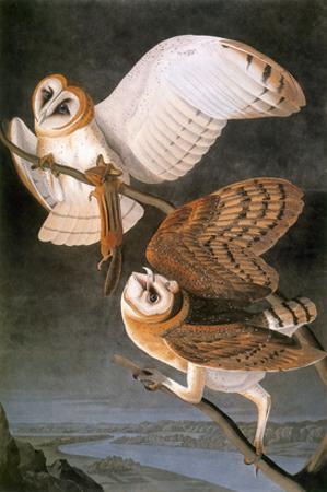 Audubon: Owl by John James Audubon