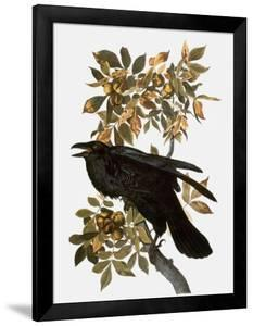 Audubon: Raven by John James Audubon