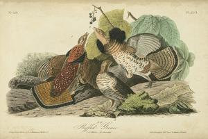 Audubon Ruffed Grouse by John James Audubon