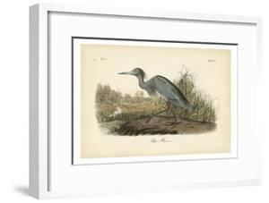 Audubon's Blue Heron by John James Audubon