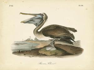 Audubon's Brown Pelican by John James Audubon