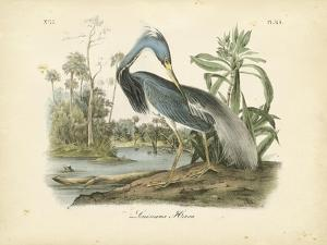 Audubon's Louisiana Heron by John James Audubon