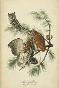 Audubon Screech Owl by John James Audubon