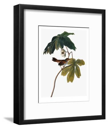 Audubon: Sparrow, 1827-38