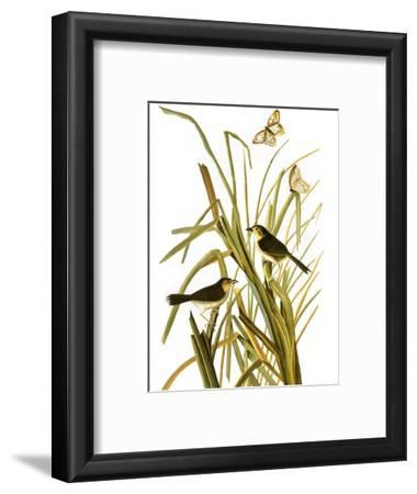 Audubon: Sparrow, 1827
