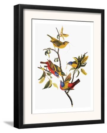 Audubon: Sparrows