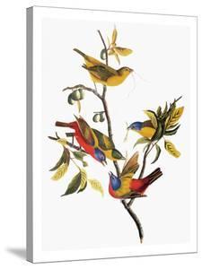Audubon: Sparrows by John James Audubon