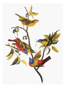 Audubon: Sparrows by John James Audubon