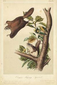 Audubon Squirrel IV by John James Audubon