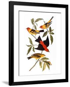 Audubon: Tanager, 1827 by John James Audubon