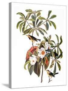 Audubon: Warbler, 1827-38 by John James Audubon