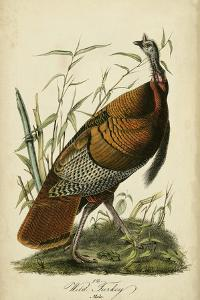 Audubon Wild Turkey by John James Audubon