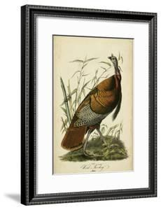 Audubon Wild Turkey by John James Audubon