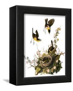 Audubon: Yellow Chat by John James Audubon