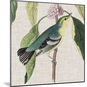 Avian Crop IV by John James Audubon