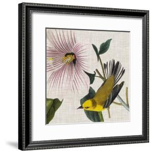 Avian Crop V by John James Audubon