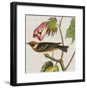 Avian Crop VI by John James Audubon