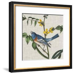 Avian Crop VIII by John James Audubon