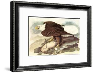 Bald Eagle 2 by John James Audubon