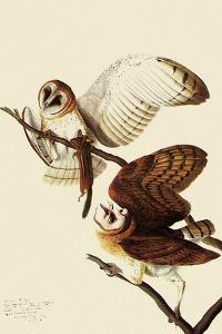 Barn Owls by John James Audubon