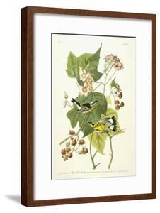 Black and Yellow Warbler and Flowering Raspberry, C.1826-1838 by John James Audubon