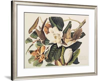 Black-Billed Cuckoo on Magnolia Grandiflora, 1828