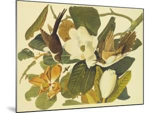 Black-Billed Cuckoo by John James Audubon