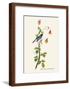 Black-Throated Blue Warbler by John James Audubon