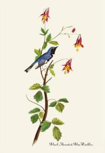 Black-Throated Blue Warbler by John James Audubon