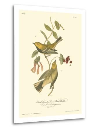 Black-Throated Green Wood Warbler