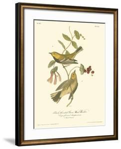 Black-Throated Green Wood Warbler by John James Audubon