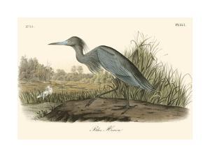 Blue Heron by John James Audubon